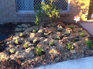 front herb garden