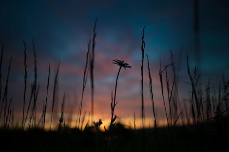 sunrise-1983740_1920